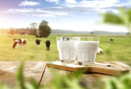 Piata de lactate din Romania: cum au evoluat afacerile primilor 10 mari producatori de lactate