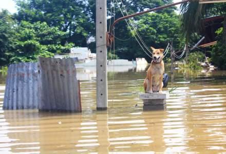 PAID: 262 de dosare de dauna inregistrate ca urmare a inundatiilor din perioada iunie - iulie