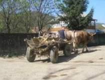 Romanii de la sat locuiesc in...