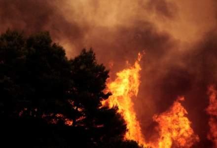 Video. Incendiile din Grecia in imagini: cel putin 79 de persoane au decedat