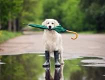Cod galben de ploi torentiale...