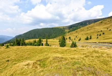 Peste 12 milioane de metri cubi de lemn, recoltati anul trecut din padurile proprietate publica