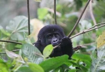 Vacanta in Uganda, locul unde natura este mai aproape de inceputurile lumii