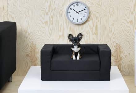 IKEA lanseaza o gama de mobilier pentru animale de companie, disponibila si in Romania