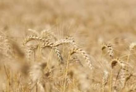 Cat de profitabila poate fi agricultura? Potential versus riscuri