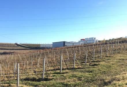 In vizita la crama Jidvei de la Tauni. Cum se produce vinul in inima Transilvaniei