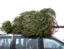 IGPR: Peste 9.000 de pomi de...