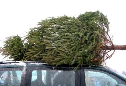 IGPR: Peste 9.000 de pomi de Craciun au fost confiscati si peste 10.000 de sanctiuni contraventionale au fost aplicate