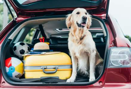 6 lucruri pe care ar trebui sa le stii daca vrei sa calatoresti cu animalul tau in strainatate