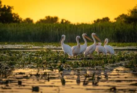 Turismul de observare a pasarilor in Delta Dunarii, in crestere