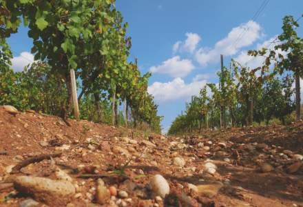 Vinarte mizeaza pe vinuri premium si turism viticol pentru vanzari de 12 mil. lei in 2019