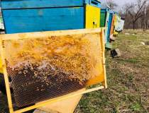 Bee Farming: inginerul -...