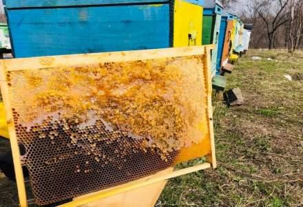 Bee Farming, inginerul-antreprenor si afacerea cu albine care vinde in online