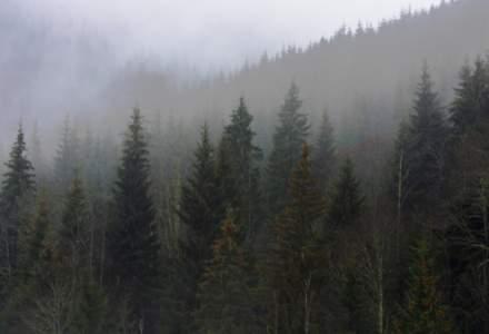 Statul va pierde pana la 6,5 milioane de euro daca Dragnea da padurile Bisericii, spun silvicultorii