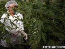 Marijuana: o problema morala...