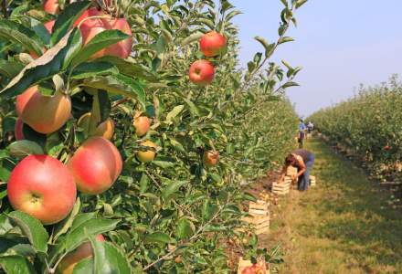 Joburi in Spania, in domeniul agriculol. Ce salariu se ofera