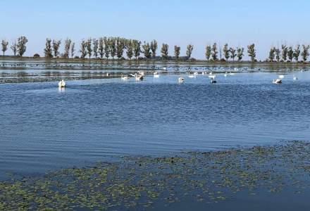 WWF propune iubitorilor de natura un petic de Delta langa Bucuresti: Ciocanesti-Dunare, judetul Calarasi