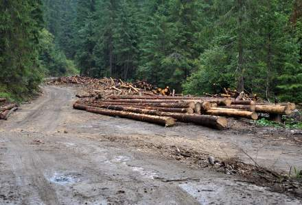 IGPR: Aproape 23.000 mc de material lemnos, confiscati in prima parte a anului;valoarea - peste 6,6 milioane de lei