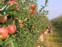 Paradoxul agriculturii:...