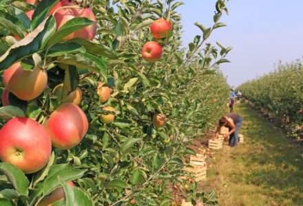 Paradoxul agriculturii: Romanii o considera importanta, dar 70% dintre ei nu ar lucra in acest sector, iar jumatate nu si-ar da copiii la un liceu agricol