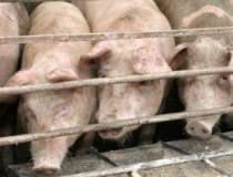 Consumul de carne de porc va...