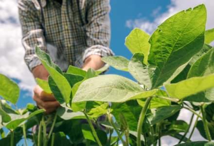 Cum sa obtii o cultura de soia de calitate - ce trebuie sa stie orice fermier