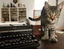 Pisicile lui Hemingway pierd...