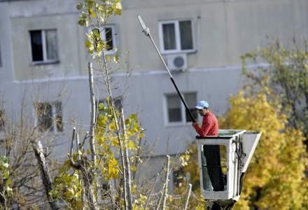 Toaletarea arborilor, o afacere de zeci de milioane lei: cat platesc primariile din Bucuresti si cine a luat contractele