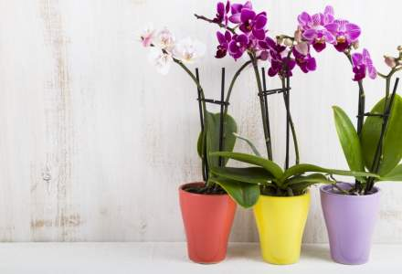 O tanara austriaca a reusit sa scape din casa unui criminal dupa ce i-a laudat orhideele