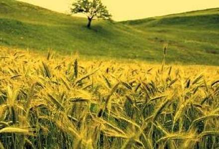 SIF Moldova incaseaza 1 mil. euro pe actiunile de la Comcereal Tulcea
