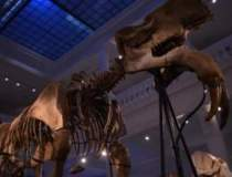 Muzeul Antipa face MILIOANE...