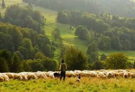 Cei mai mari angajatori din agricultura: producatorii de carne, in top