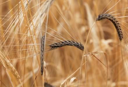 Cum se pot recunoaste si preveni bolile periculoase ale culturilor de cereale