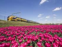 Mersul trenurilor din Olanda...