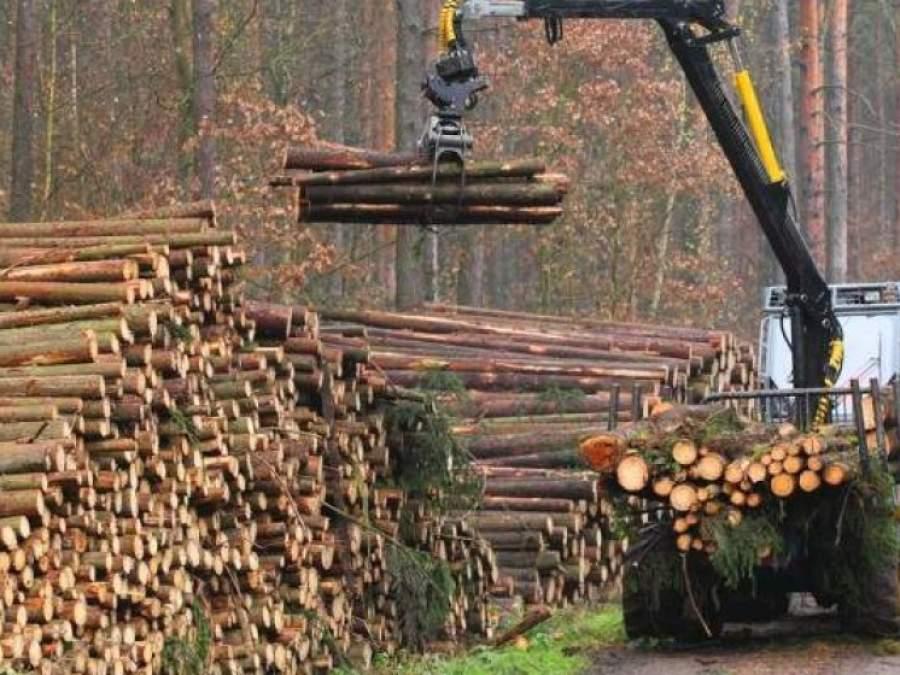 comercializarea cherestelei forestiere