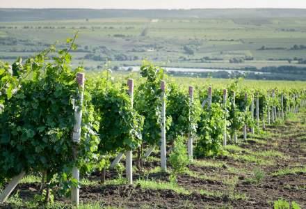 Regiuni viticole mai putin cunoscute unde poti face degustari de vin: TOP 5 destinatii in care sa mergi toamna asta