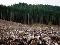 Greenpeace: 90.000 de metri...