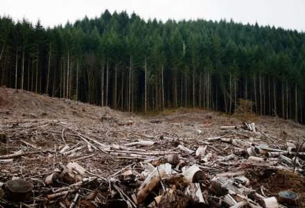 Greenpeace: 90.000 de metri cubi nu pot pleca din padure cu caruta
