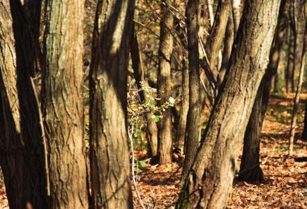 Padurea Parc Baneasa ar putea trece in domeniul public al Capitalei. in scopul reamenajarii ca parc