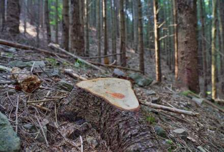 Greenpeace: Autoritatile depisteaza doar 1% din taierile ilegale de paduri