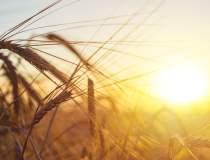"""""""Din agricultura nu pierzi""""...."""