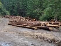 Fordaq: Industria lemnului si...