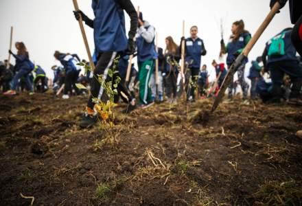 Peste 70.000 de copaci au fost plantati in aceasta toamna in campania de impadurire sustinuta de OMV Petrom
