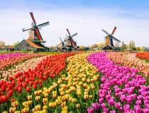 Olanda si-a schimbat numele...