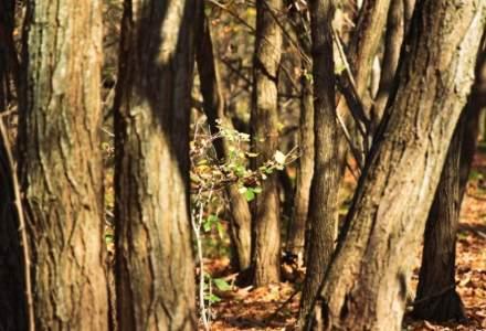 Ministrul Mediului se duce sa cerceteze taierile din Padurea Baneasa [VIDEO]