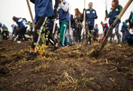 Campanie inedita a unei facultati din Cluj: Iei 10 la sesiune, planteaza un copac
