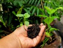 Agricultura ecologica ocupa...