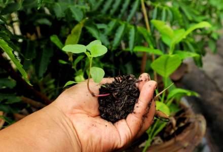 Eurostat: Doar 2,4% din suprafata agricola a Romaniei este reprezentata de culturi ecologice
