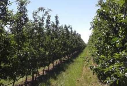 Domeniile Ostrov vrea 2 mil. euro din vanzarea de fructe