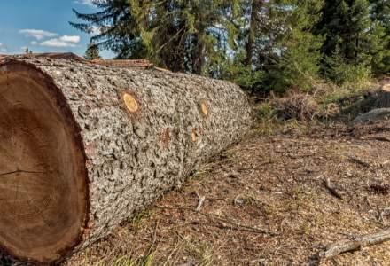 Taieri de copaci in Parcul Herastrau